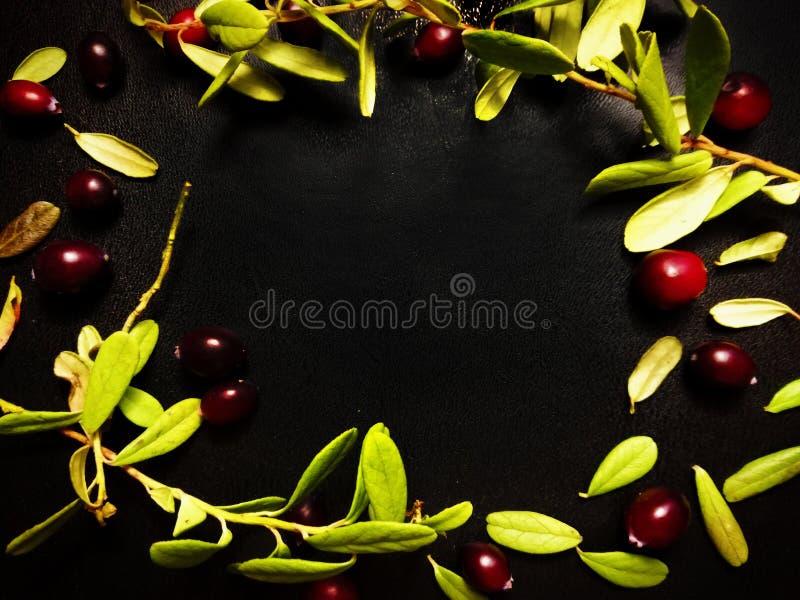 groene bladeren van vossebes royalty-vrije stock afbeeldingen
