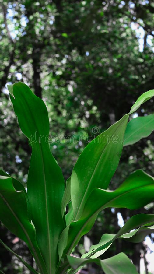 Groene bladeren van wilde installatie in het bos royalty-vrije stock foto's