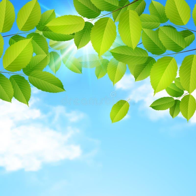 Groene bladeren, wolken en blauwe hemel royalty-vrije illustratie