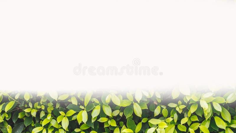 Groene bladerenachtergrond royalty-vrije stock fotografie