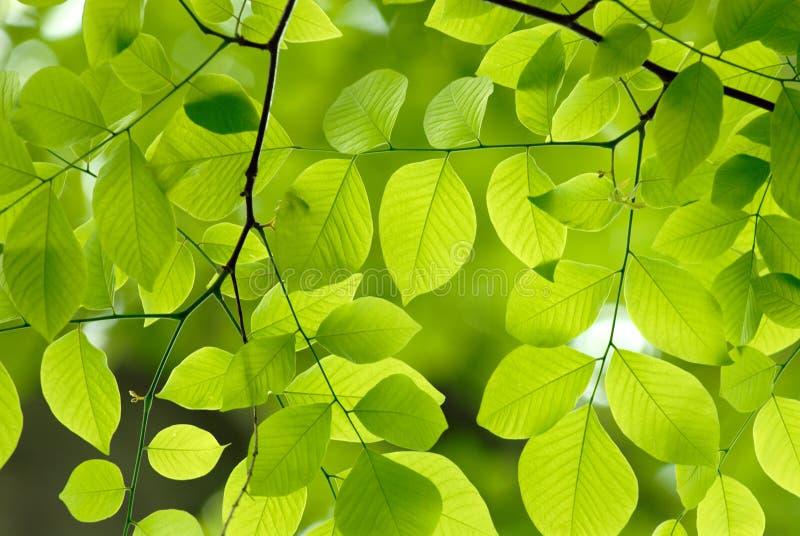 Groene bladerenachtergrond royalty-vrije stock afbeeldingen