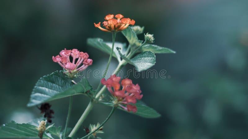 Groene Bladerenachtergrond met klein weinig gele roze bloem royalty-vrije stock fotografie