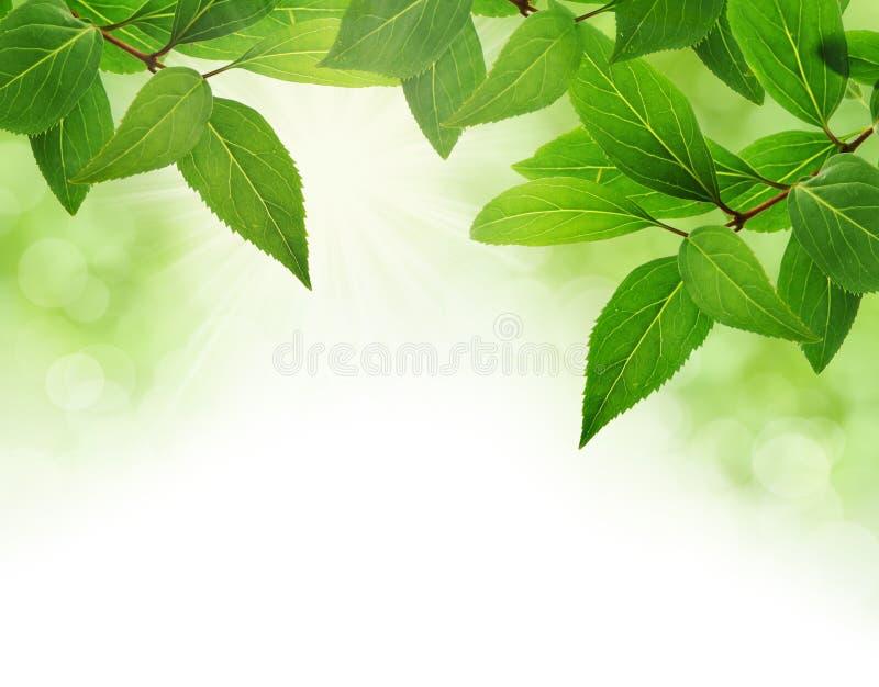 Groene bladerengrens stock fotografie