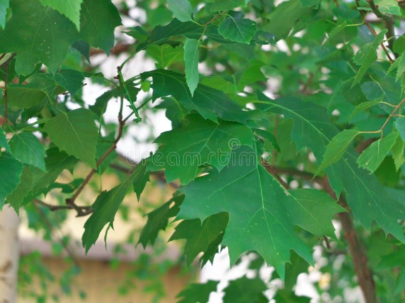 Groene bladerenmacro in het park stock foto's