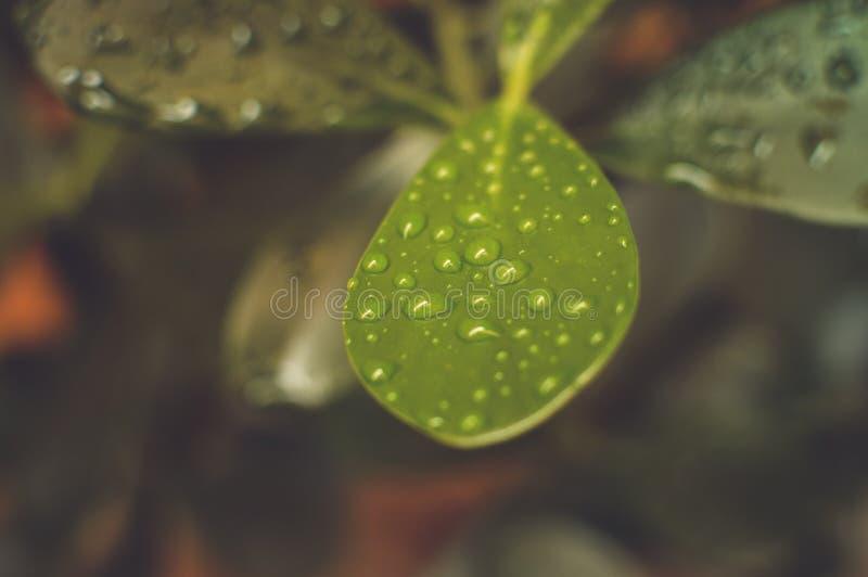 Groene bladinstallatie stock foto's