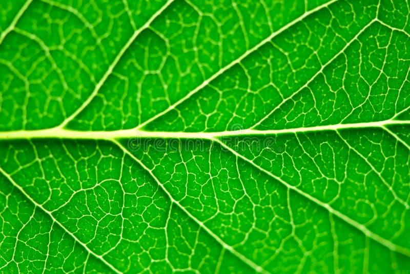 Groene bladmacro royalty-vrije stock foto