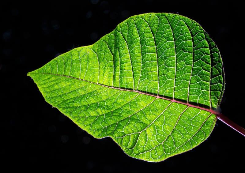 Groene bladplant stock foto