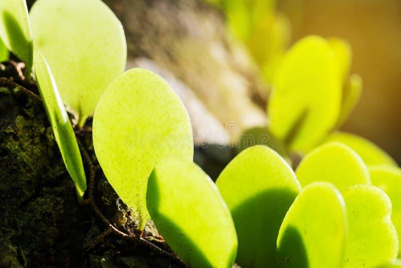Groene bladschaduw met textuur en patroon stock foto