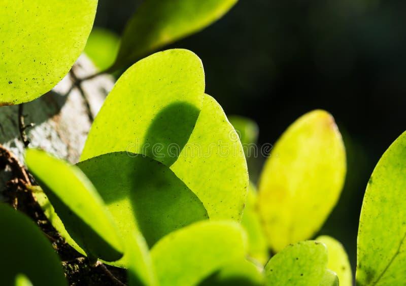 Groene bladschaduw met textuur en patroon royalty-vrije stock afbeelding