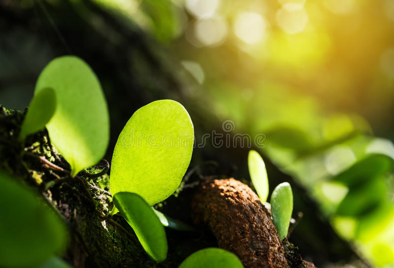 Groene bladschaduw met textuur en patroon stock fotografie