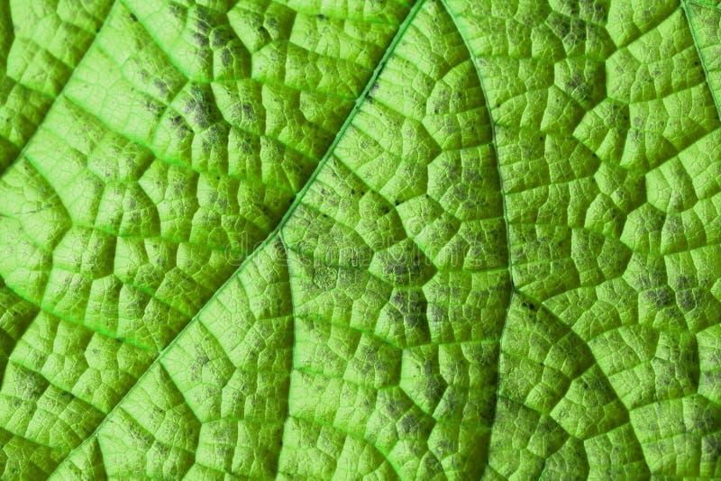Groene bladstructuur stock fotografie