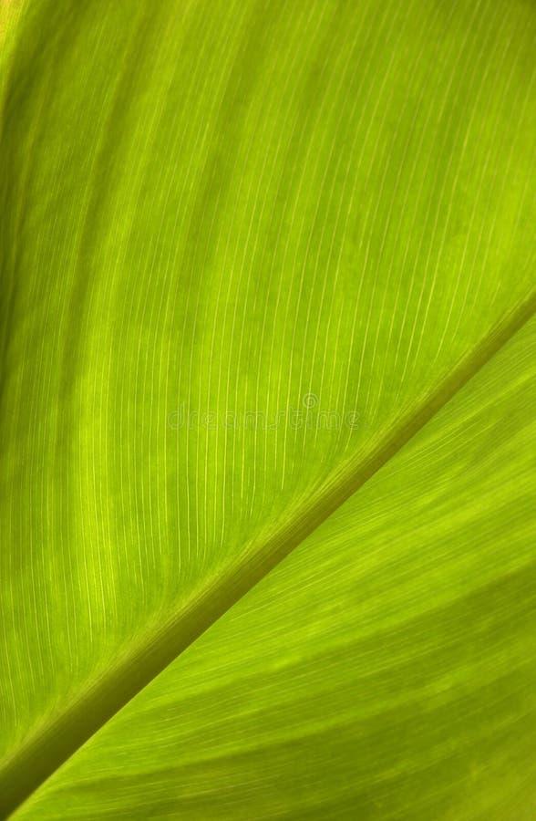 Groene bladtextuur stock afbeeldingen