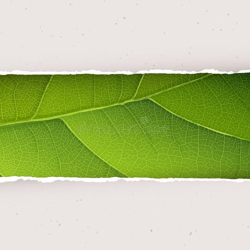 Groene bladtextuur onder gescheurde document platen vector illustratie