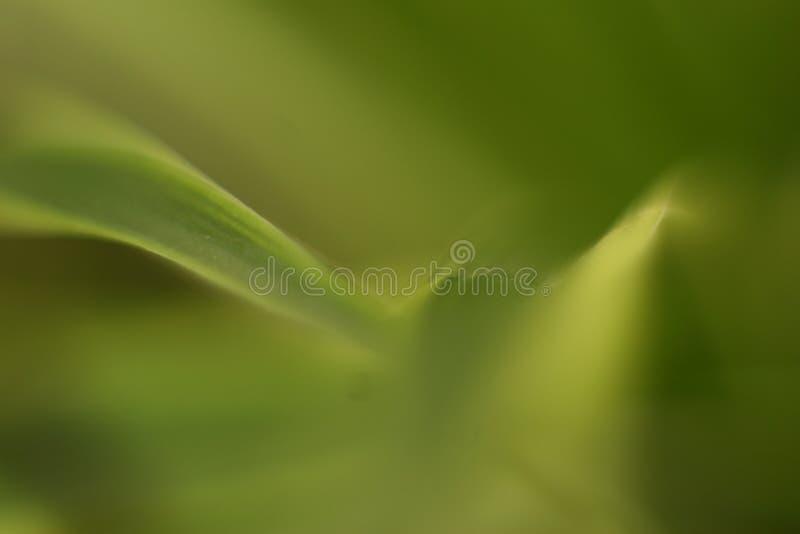Groene bokeh 3 stock foto's