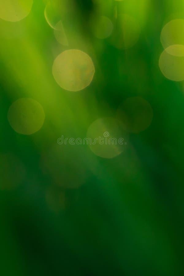Groene bokehachtergrond van waterdalingen op bladeren stock afbeelding
