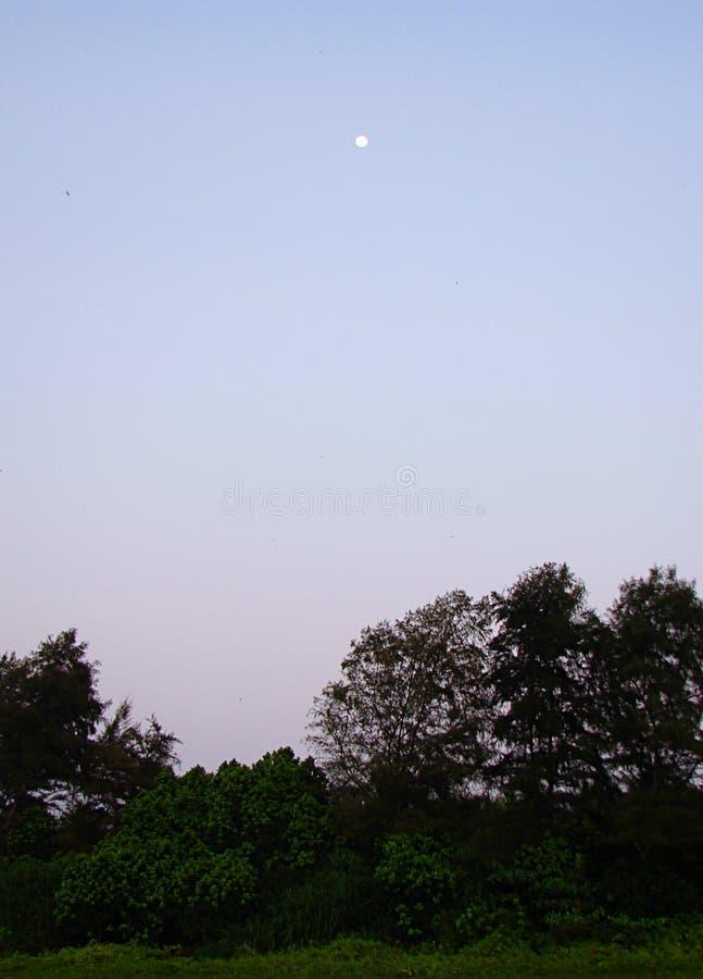 Groene Bomen en Aanplanting met Maan in Schemering - Natuurlijke Achtergrond stock foto