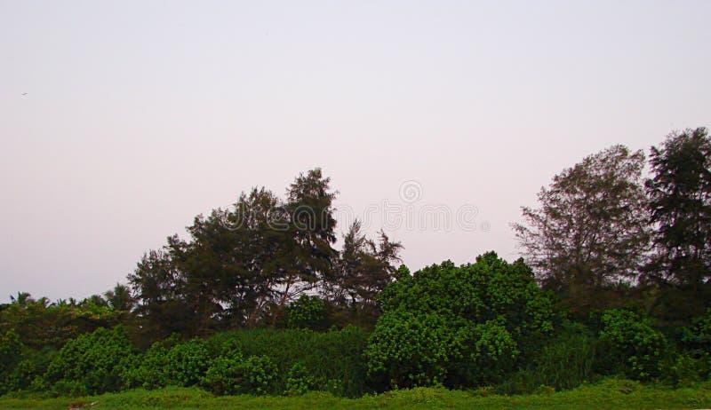 Groene Bomen en Aanplanting - sparen Milieu Natuurlijke Achtergrond royalty-vrije stock afbeeldingen