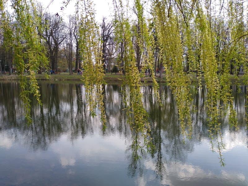 Groene bomen en blauwe hemel in stadspark Ivano-Frankivsk, de Oekra?ne De vroege Lente stock foto's