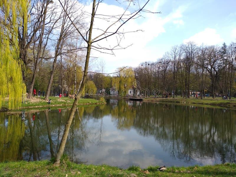 Groene bomen en blauwe hemel in stadspark Ivano-Frankivsk, de Oekra?ne De vroege Lente royalty-vrije stock fotografie