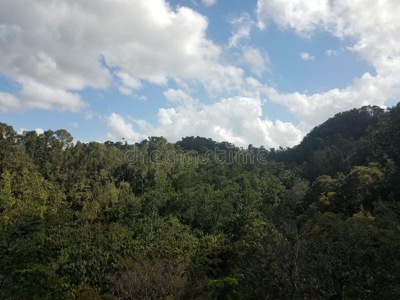 Groene bomen en installaties en houten observatietoren in het Guajataca-bos in Puerto Rico stock afbeelding