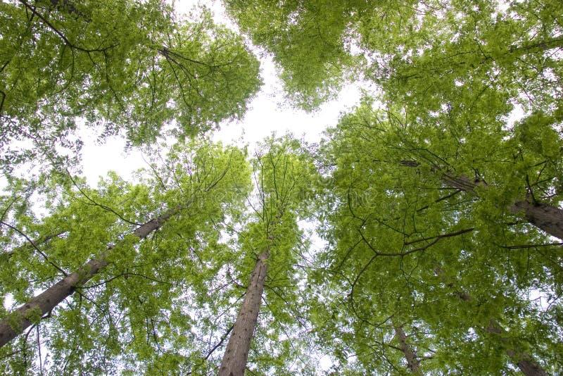Groene bomen naar omhoog royalty-vrije stock afbeeldingen