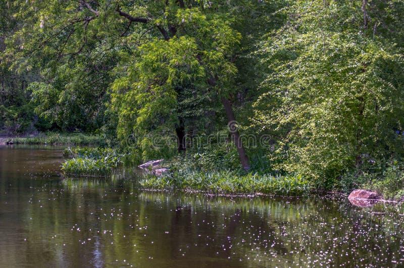 Groene bomen op het meerlandschap stock afbeelding