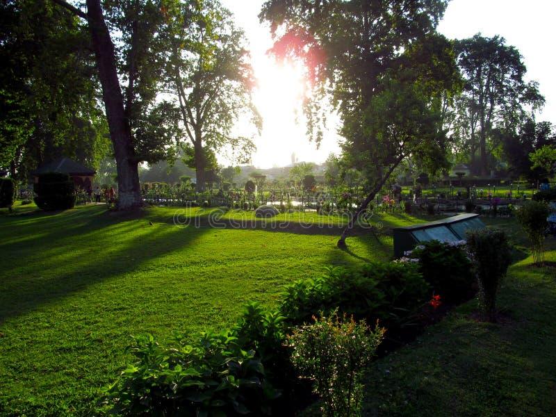 Bomen In Tuin : Groene bomen in tuin stock afbeelding afbeelding bestaande uit