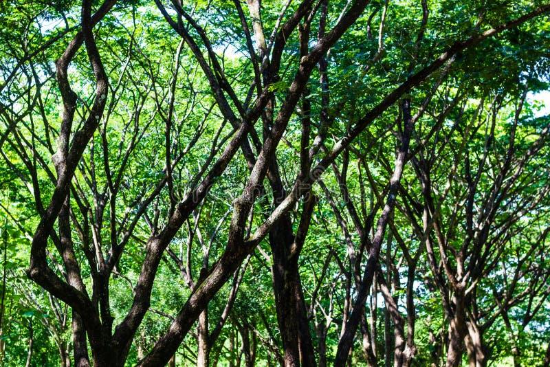 Groene bomenachtergrond stock afbeeldingen