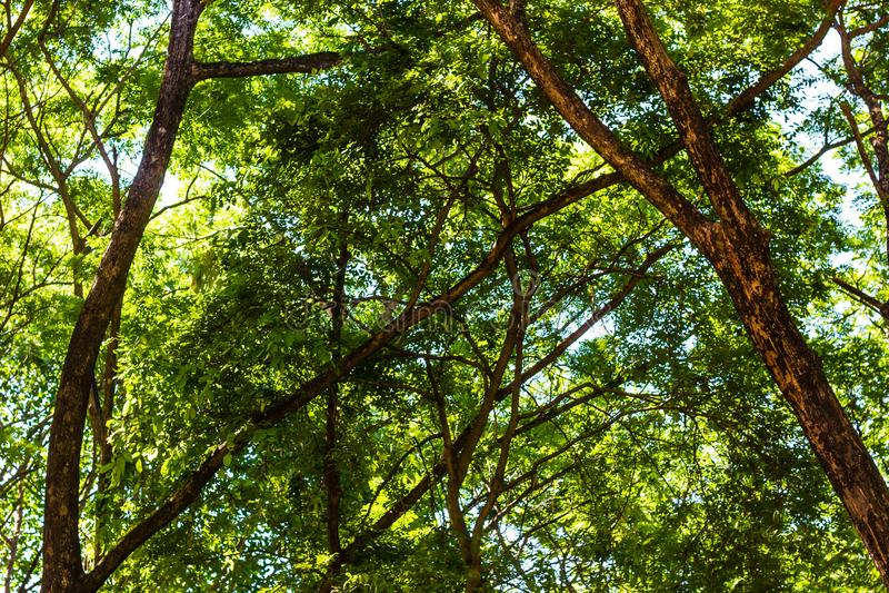 Groene bomenachtergrond stock foto