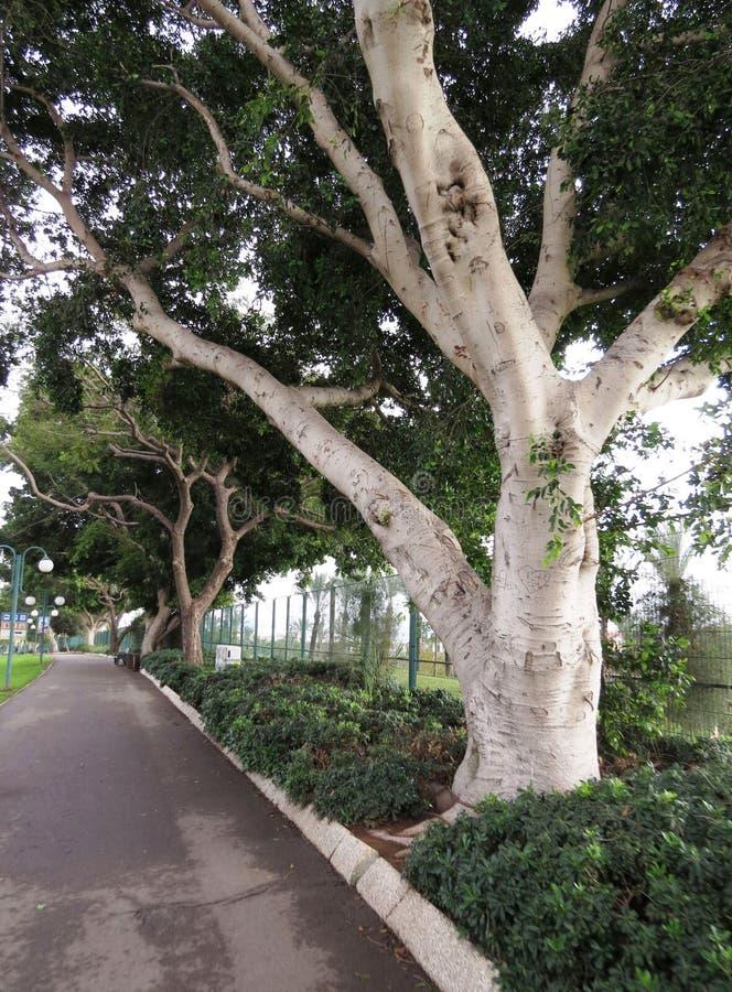 Groene Bomenopstelling stock afbeeldingen