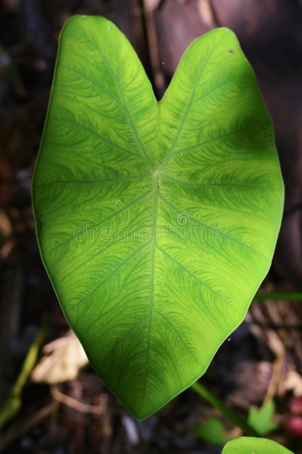 Groene bonsai in dorre aard royalty-vrije stock fotografie