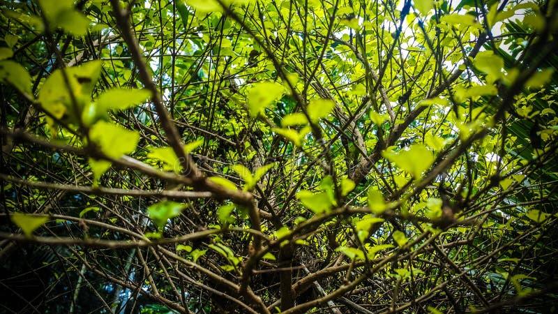 Groene boom stock foto