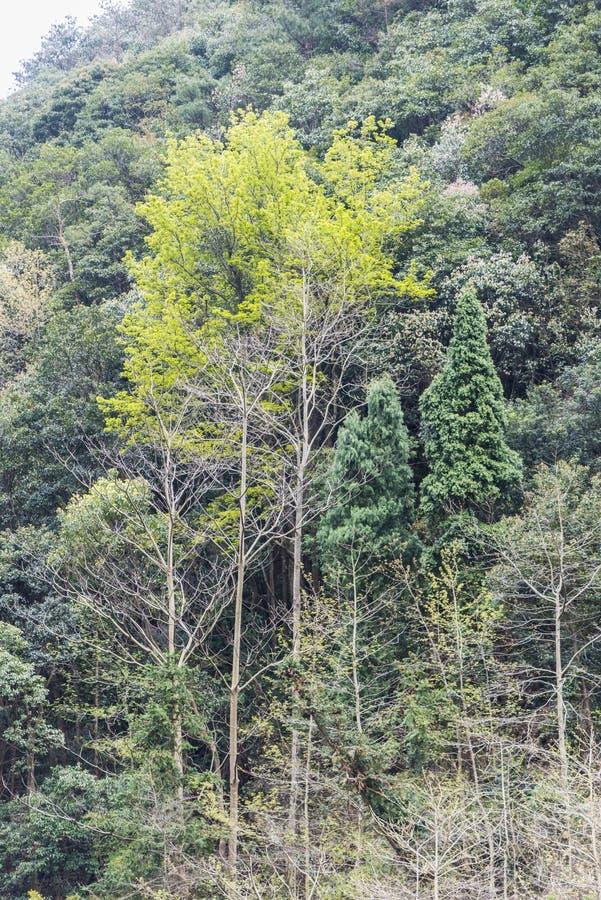 Groene boom stock afbeelding