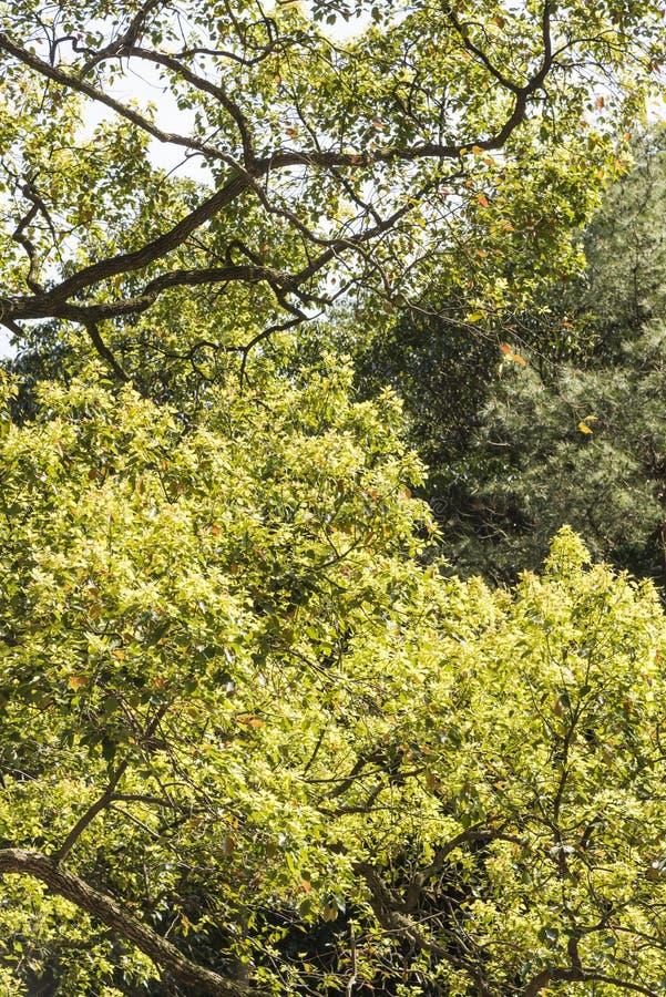 Groene boom stock afbeeldingen