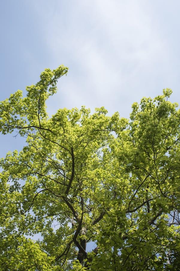 Groene boom stock foto's