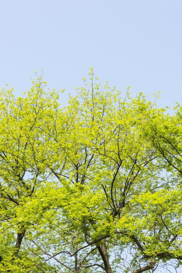 Groene boom royalty-vrije stock foto's