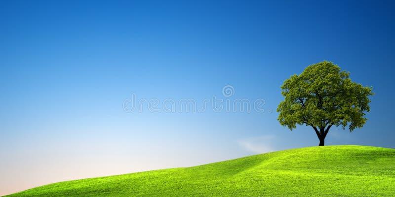 Groene boom bij zonsondergang stock afbeelding