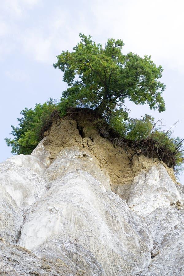 Groene boom bovenop een zoute berg royalty-vrije stock fotografie