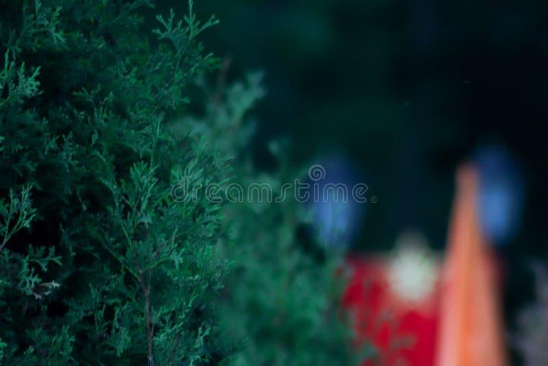 Groene boom in een koel Park royalty-vrije stock afbeeldingen