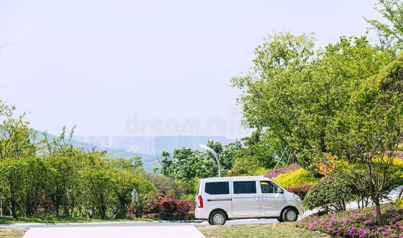 Groene boom en de bestelwagen stock fotografie