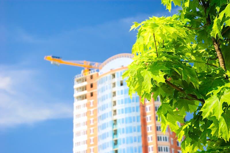 Groene boom en de toenemende bouw. stock fotografie