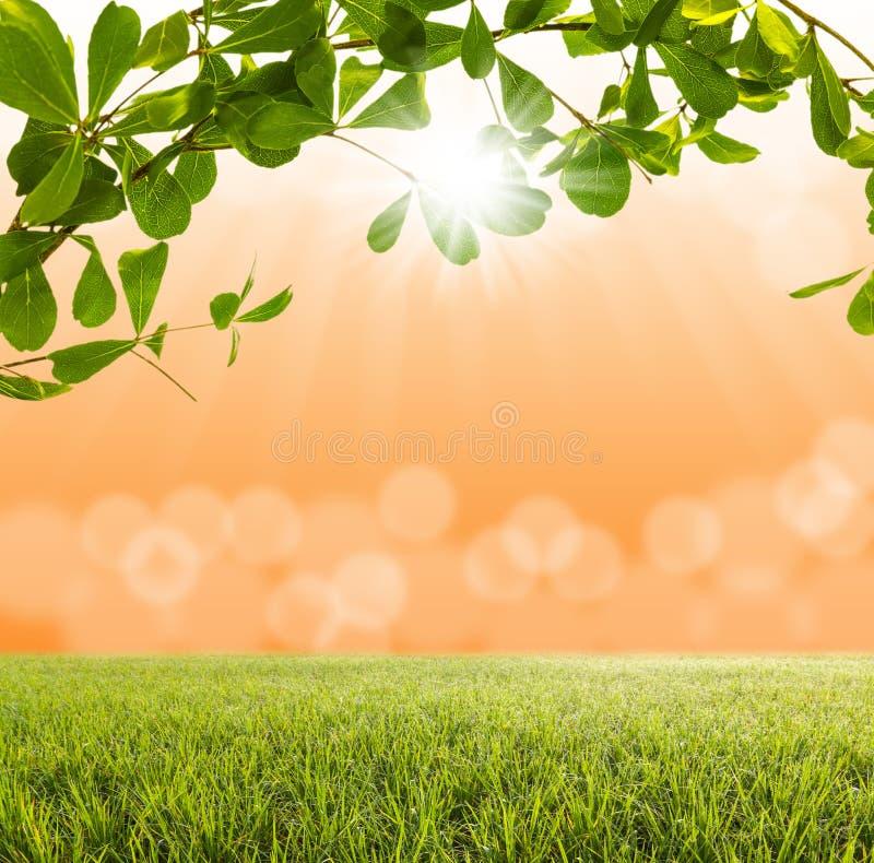 Groene boom en groen gras met vaag licht bokeh royalty-vrije stock afbeeldingen