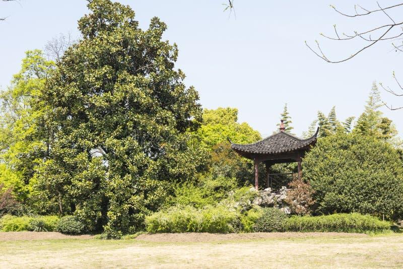 Groene boom en pavilione stock afbeelding