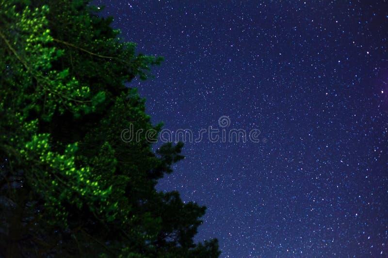 Groene boom en sterren op blauwe hemel royalty-vrije stock foto's