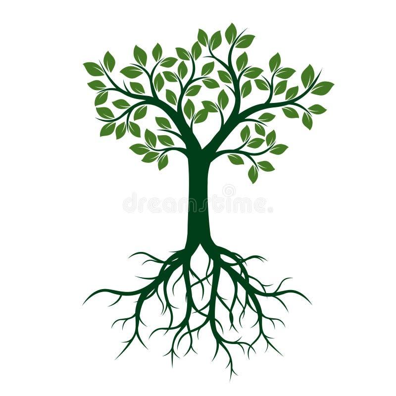 Groene Boom met Bladeren en Wortels vector illustratie