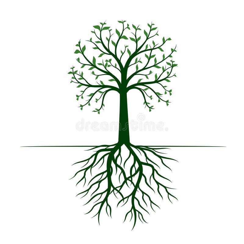 Groene Boom met Bladeren en Wortels op witte achtergrond Vector illustratie royalty-vrije illustratie