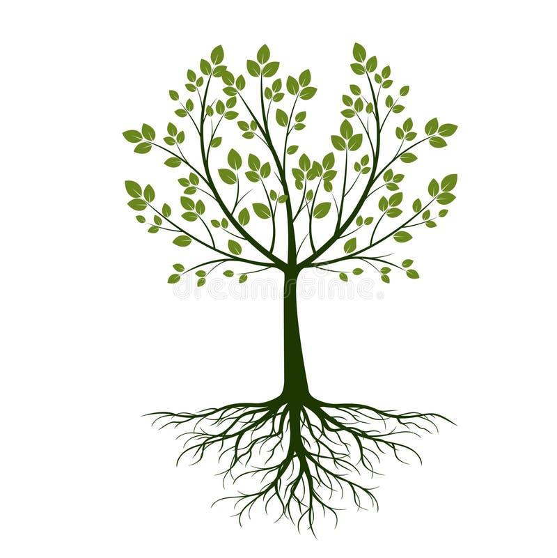 Groene boom met bladeren op witte achtergrond Vector illustratie royalty-vrije illustratie
