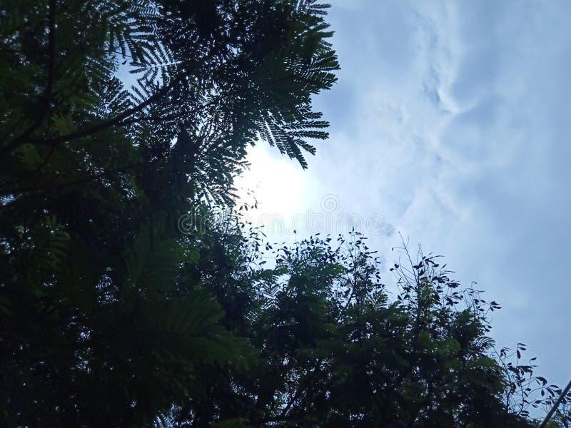 Groene boom met een piepende zon stock afbeeldingen