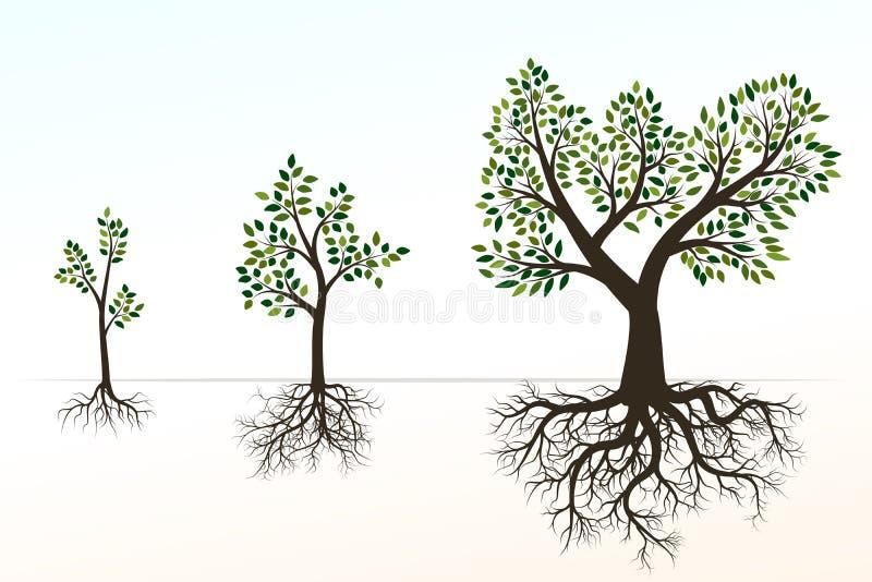 Groene boom met wortels Vector illustratie Vorm van Boom en R royalty-vrije illustratie