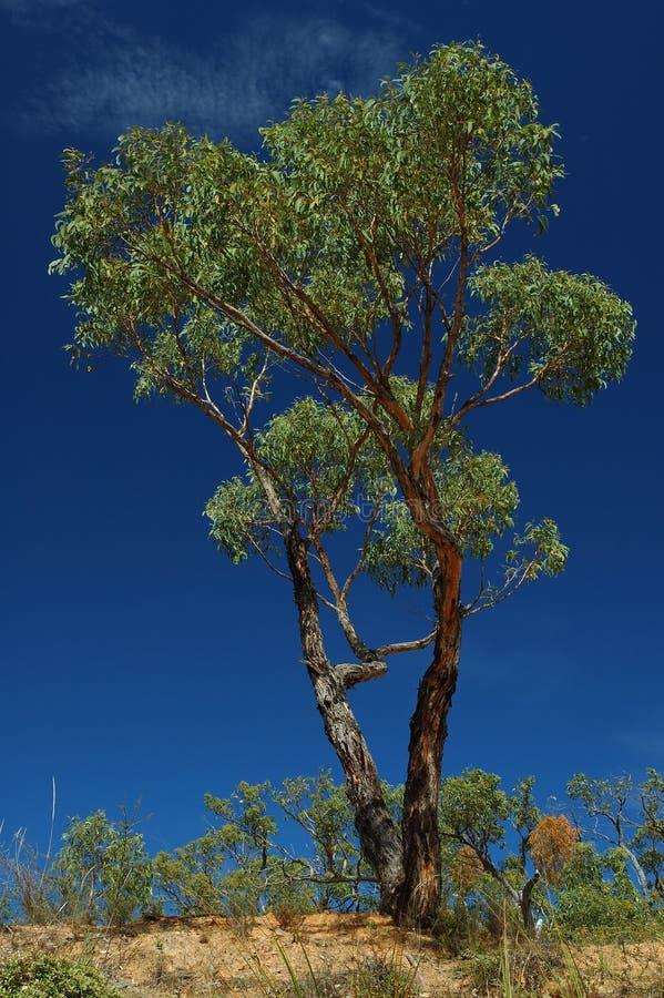 Groene boom op een blauwe hemel royalty-vrije stock fotografie